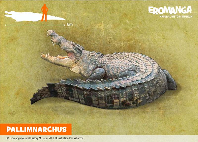 PALLIMNARCHUS illustration for ENHM