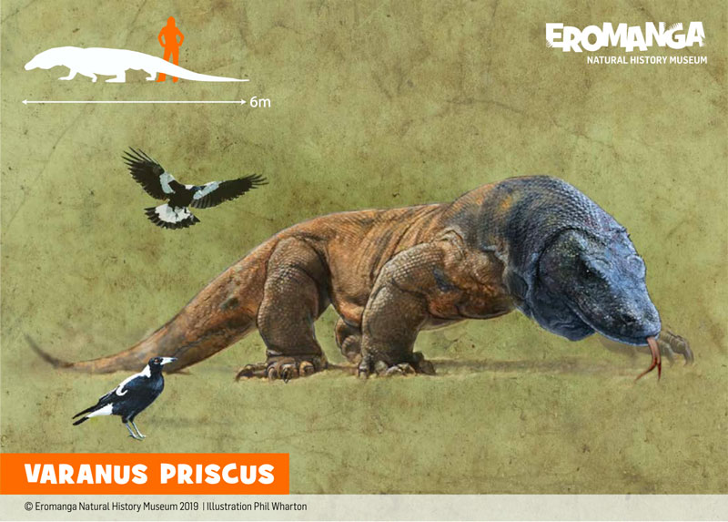 VARANUS-PRISCUS Illustration for ENHM
