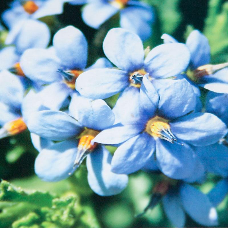 Individual Flora Cards