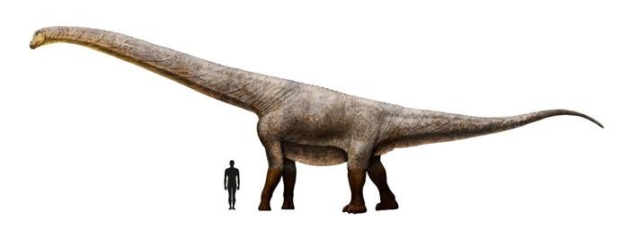 Titanosaur human scale
